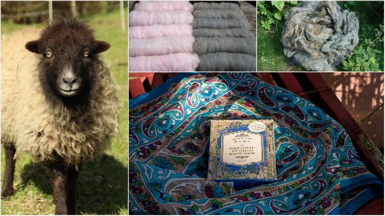 Бретонска овца среща Индия