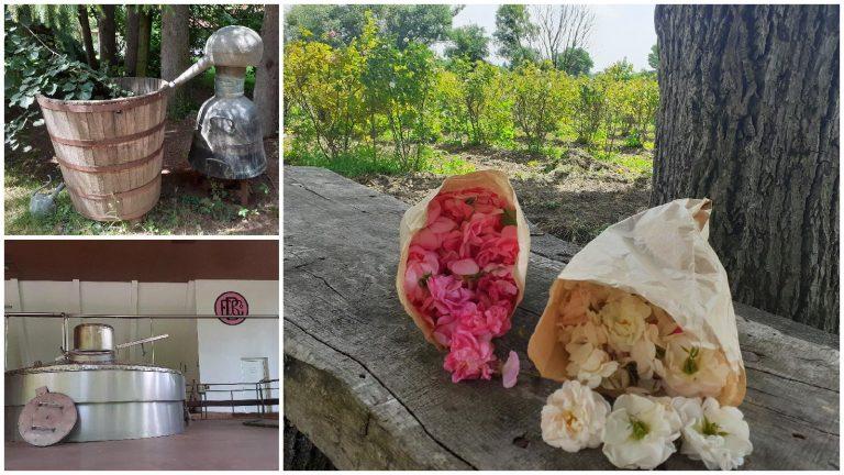 Долината на розите и розоварна Еньо Бончев