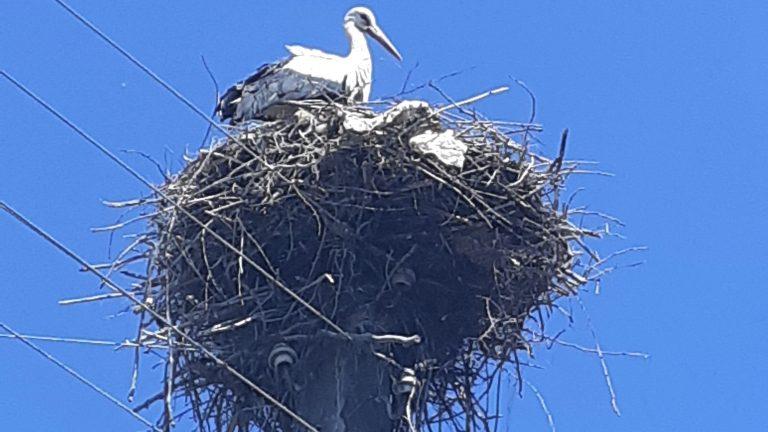 Летящите хора, Благо и Веста, и поглед наживо в щъркеловото гнездо в Баничан
